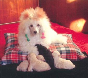 Лилия со щенками